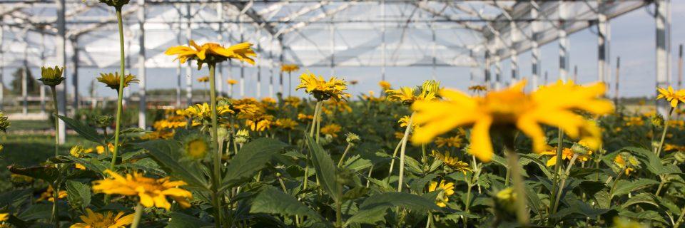 Unsere Blumen und Pflanzen haben die kürzest mögliche Anreise bis zu Ihnen nach Hause